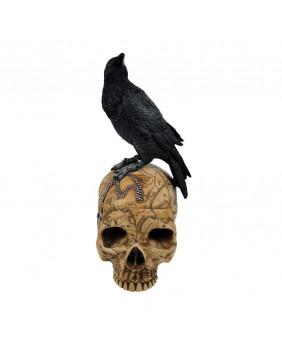 Boîte crâne avec corbeau Salems