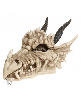 Boite crâne de dragon