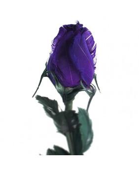 Rose gothique bleue 37004