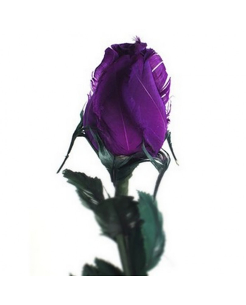 Rose goth 37003