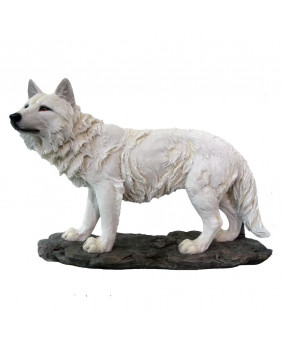Loup blanc solitaire